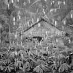 C.A La pluie_1