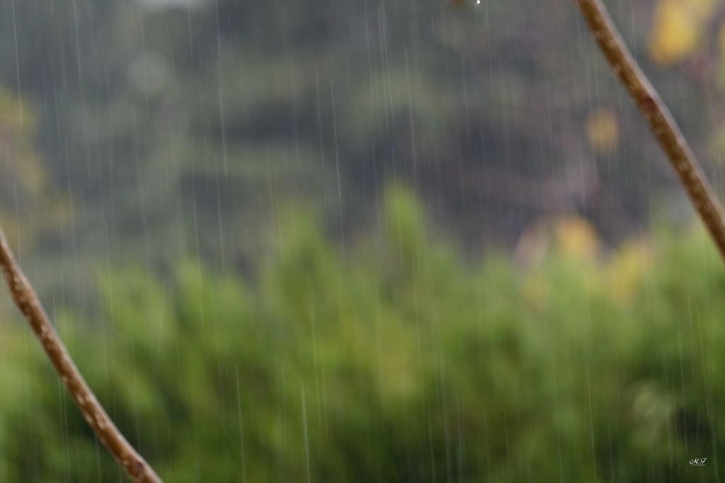 MF La pluie 03